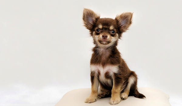 12 Most Common Dog Breeds In Shelters 1