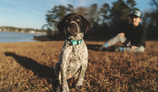 Keeping Your Pets Pest-free (Bye Flea-Cia)