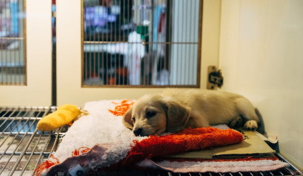 5 Things You Don't Know About Shelters