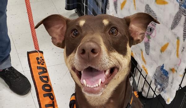 Rescue Diaries: Pflugerville Pets Alive!