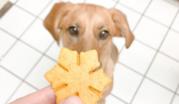 DIY Peanut Butter Punkin Dog Biscuits