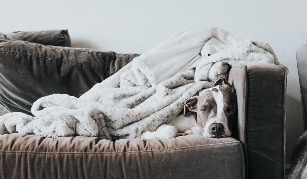 The Way To Beat Pet Boredom