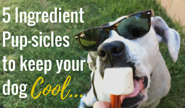 5 Ingredient Pup-sicles to Keep Your Dog Cool