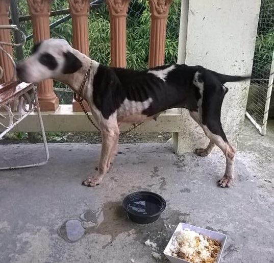 Puerto Rican Street Dog Gets a Second Chance