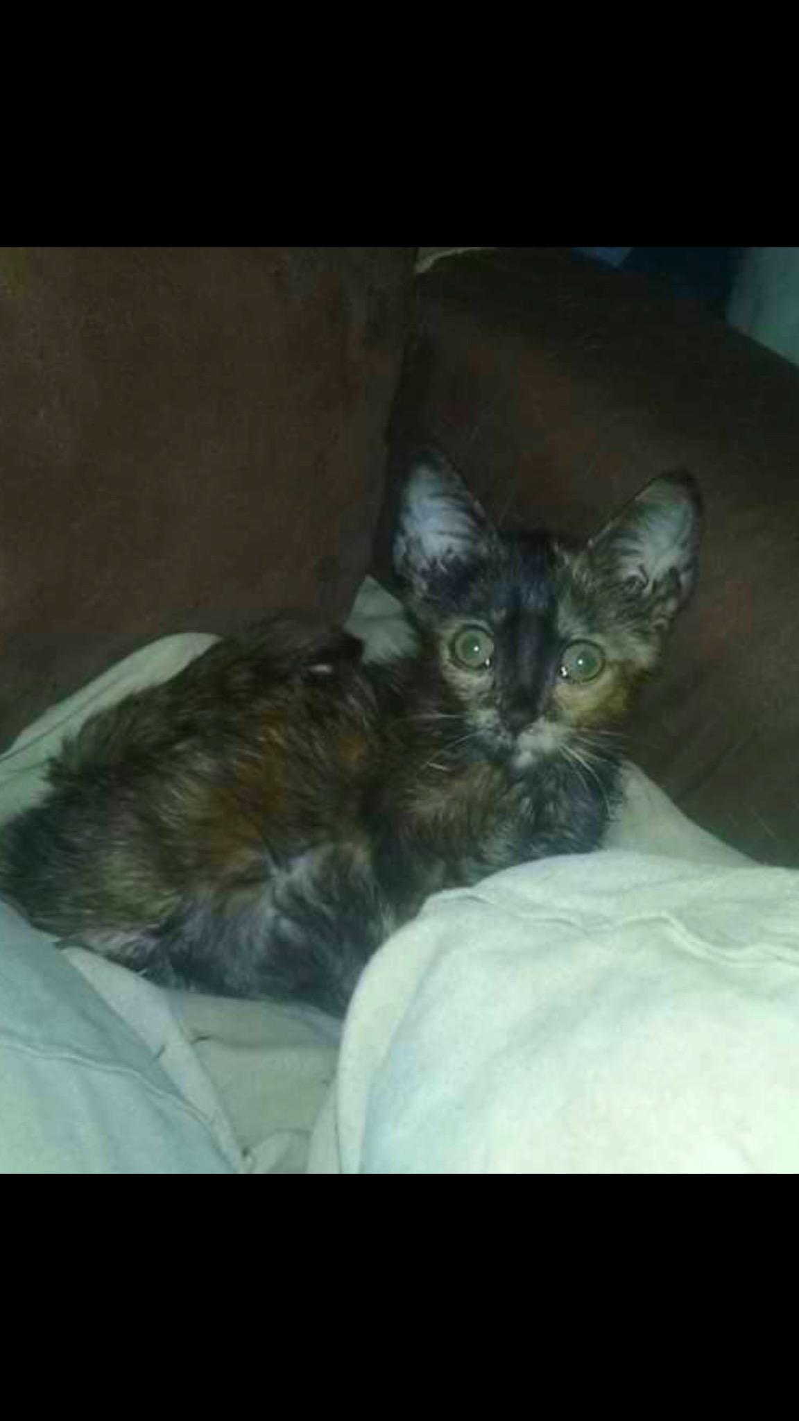 Baby Joyce The Miracle Kitten