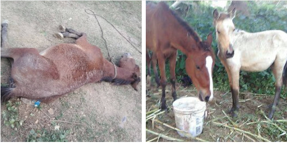 Collapsed in the mud, Canela's story of survival.