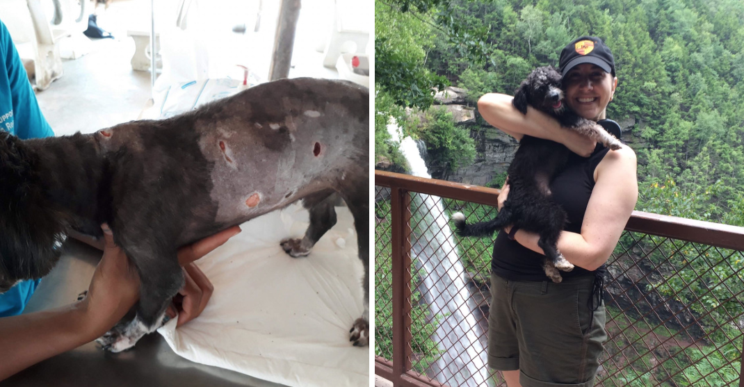 From Thailand to NYC: Toby's Rescue Adventure