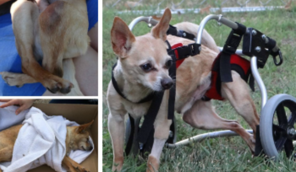 Buddy's Journey to Mobility