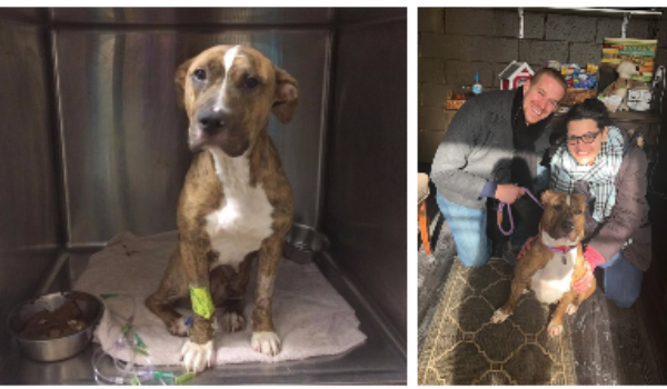 From Fractured Femur to Forever Home