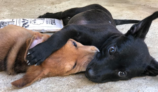 Paralyzed Puppy Finds Forever With His Brother