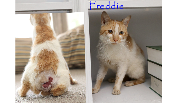 https://cuddly.com/success-story/241/freddie-must-have-suffered-but-he-needs-help-now