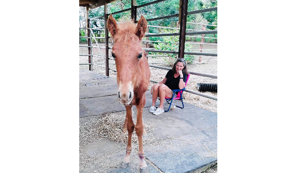 Rescued Horse Princess Lives Up To Her Name