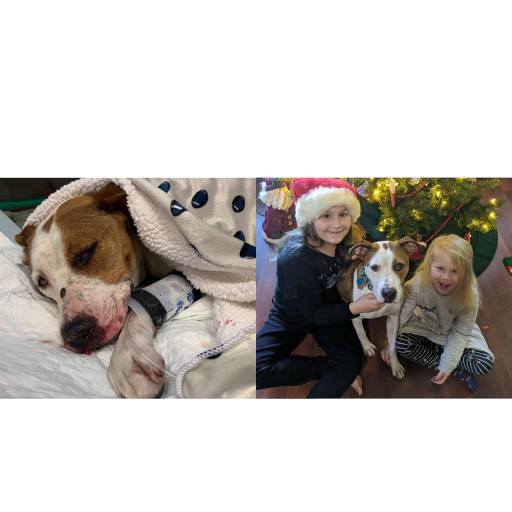 https://cuddly.com/success-story/381/pearl-the-beautiful-survivor-has-found-happiness-again