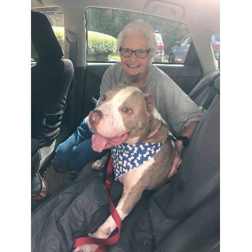 https://cuddly.com/success-story/407/bait-dog-dumped-and-left-to-die-finally-finds-his-forever-home
