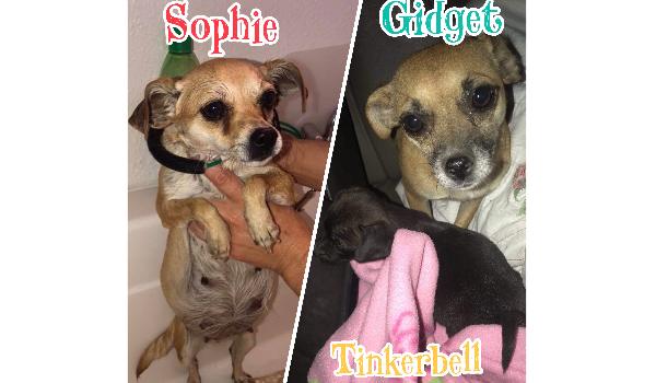 Sophie, Gidget, & Tinkerbell