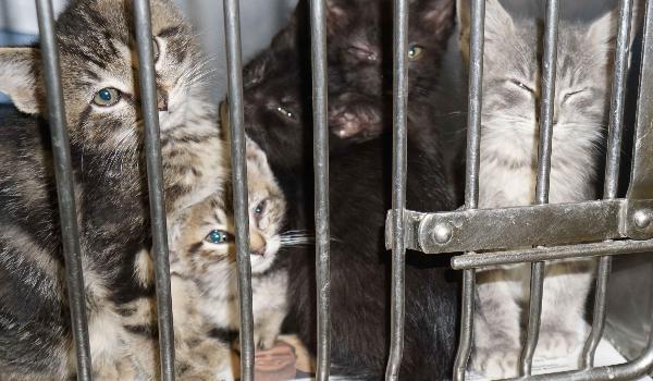Kittens in high kill shelter
