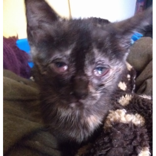 Kittens abandoned, struggling to survive!