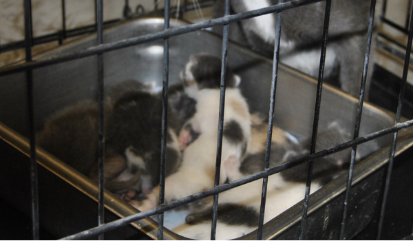 Momma & 8 kittens