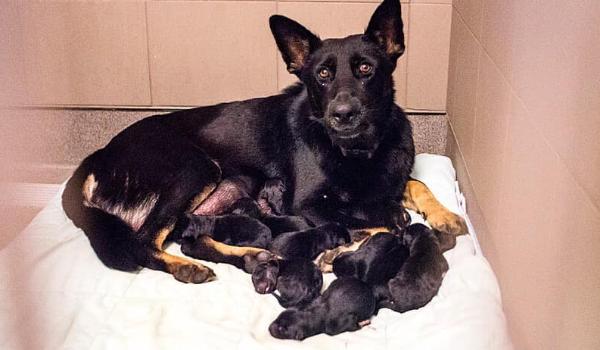 Lana & Puppies