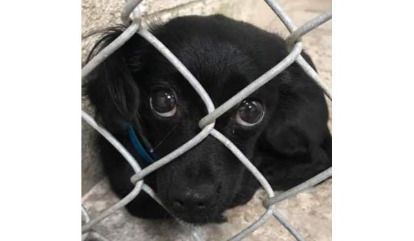 Dogs on Death Row