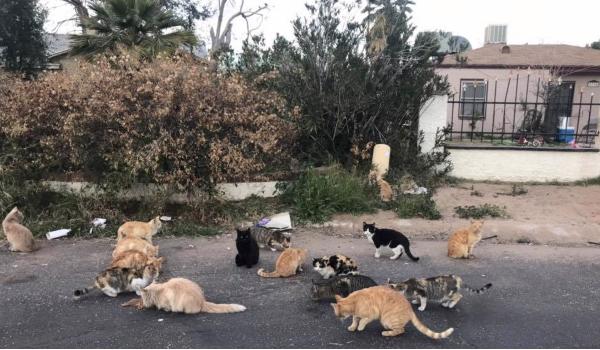 Abandoned Cat Hoard