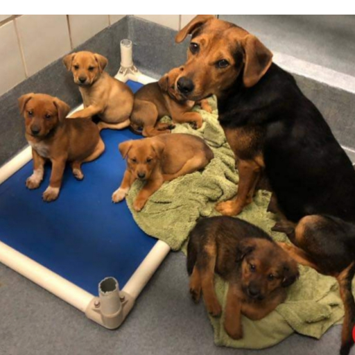 Reyna & Her 6 Puppies