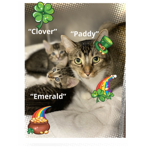 Paddy clover and Emerald