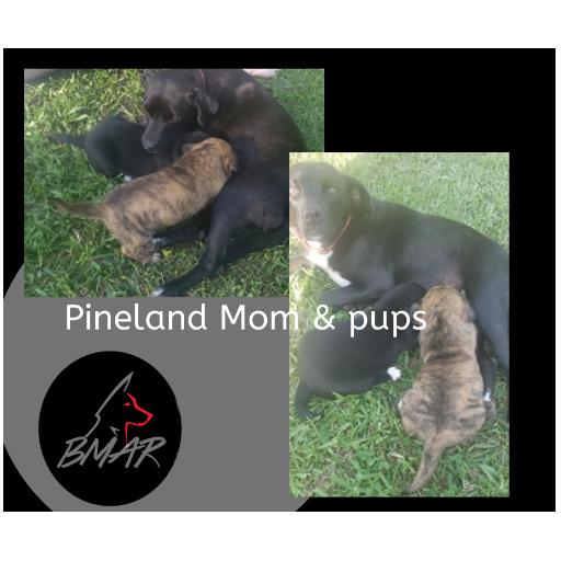 Pineland 3