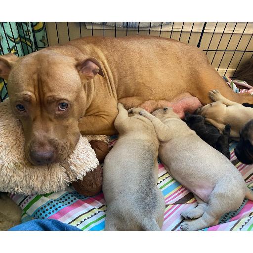 Mama Kona & Puppies