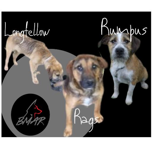 Rags, Longfellow, & Rumpus