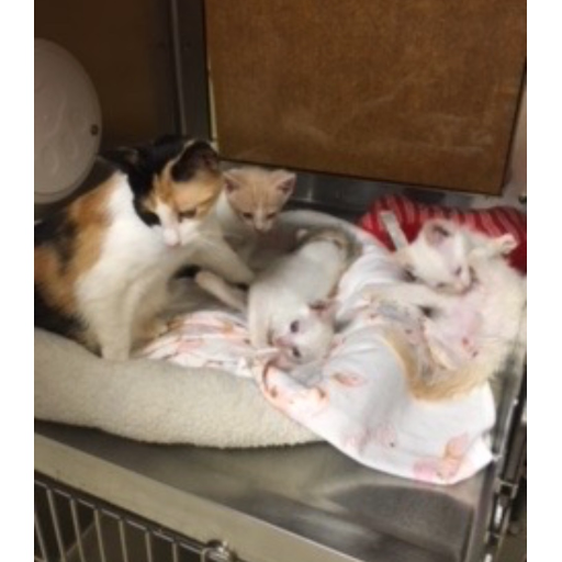 Mom and 4 babies