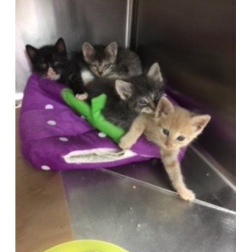 Another beautiful litter saved from death row