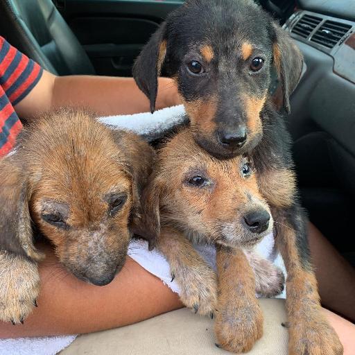 Trooper & Sarcoptic Mange Puppies