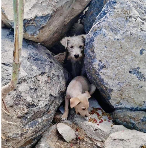 Mama Aggie & Rock Puppies