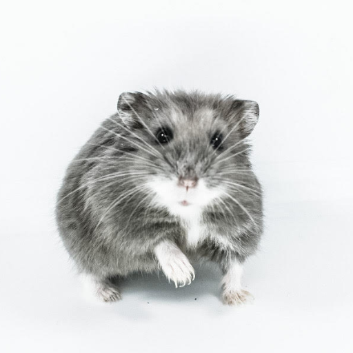 The 7 Dwarf Hamsters