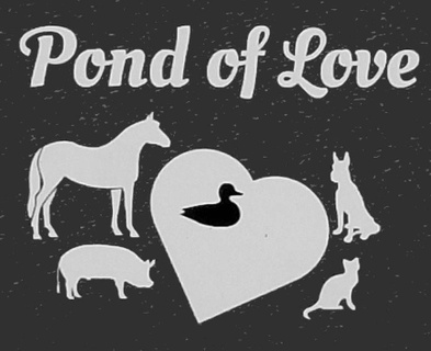 Pond of Love Rescue