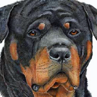 Rottweiler Rescue Society