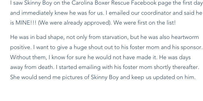 Rescue Diaries: Carolina Boxer Rescue