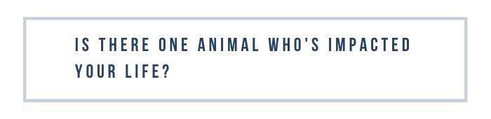 Rescue Diaries: Plugerville Pets Alive!