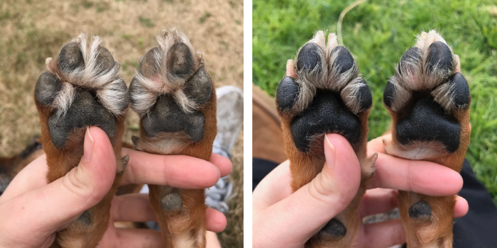 Before and After Dog Paws
