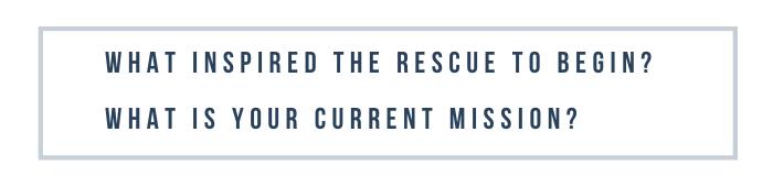 Rescue Diaries: National Boxer Rescue
