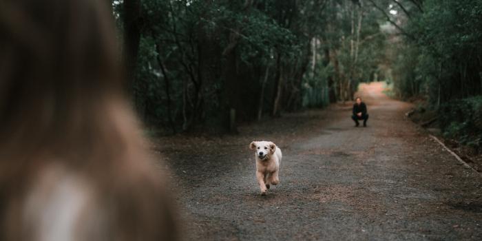 dog running to family